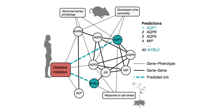 Gene-Disease Prediction: A Link Prediction Approach