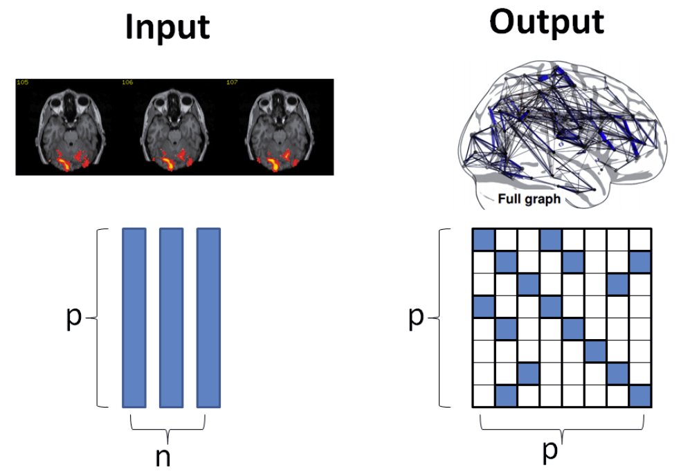 The interaction between brain regions can be recovered by our proposed algorithms.